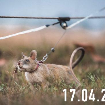 La FotoCosa del Giorno | Topi eroici