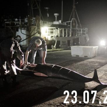 La FotoCosa del Giorno | Uomini e balene